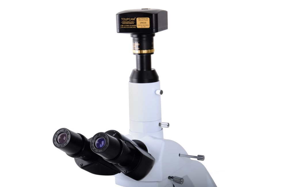 Microscope and Eyepiece Camera